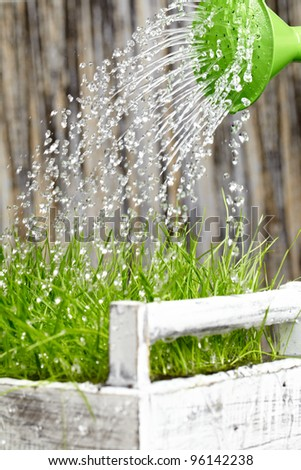 Green  watering can used to water the  frash grass - stock photo
