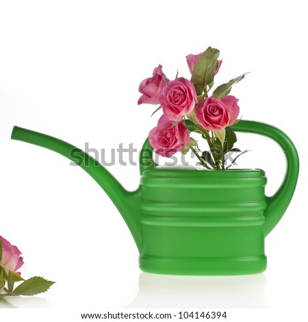 green watering can with  bouquet roses  isolated on white - stock photo