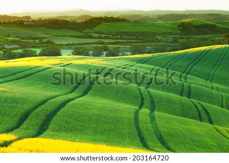 green wavy hills shined with a rising sun, Tuscany, Italy