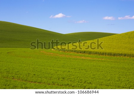 Green wavy wheat fields of Palouse, Washington - stock photo