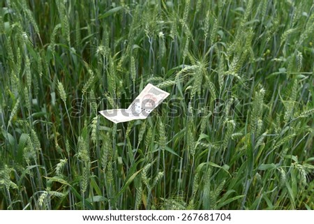 Green Wheat ears with Indian currency money of denomination 500  - stock photo