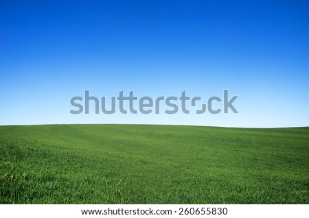 Green wheat field and blue sky - stock photo