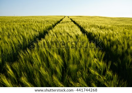 Green wheat field and blue sky, Symmetric photo - stock photo