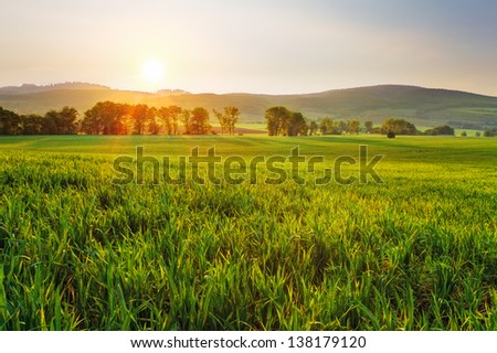 Green wheat field at sunset with sun - stock photo
