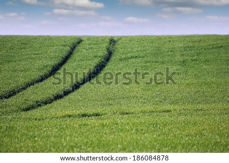 green wheat field with tractor trail and blue sky
