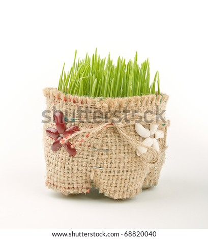 Green wheat in cup for orthodox Christmas - stock photo