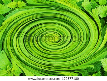 Green whirl of stinging nettles - stock photo