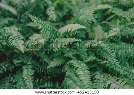 Green wild fern leaves bush pattern. Tropical forest. Eco cafe caffe restaurant decor. Travel inspiration. Postcard concept. Screensaver wallpaper. Soft, shallow focus. Vintage effect. - stock photo