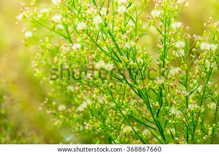 Green wild grass in the spring and summer - stock photo