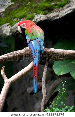 Green-wing macaw (Ara ararauna), Macaw parrot - stock photo