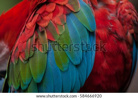 Ara Stock Images Royalty Free Images Amp Vectors