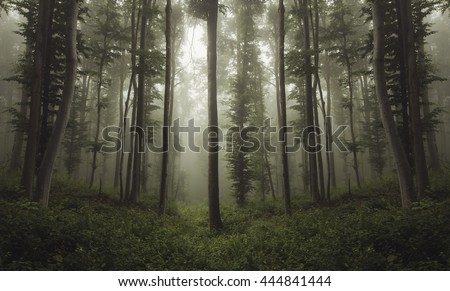 green woods in summer - stock photo