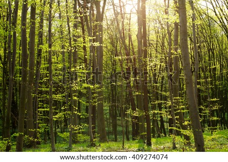 Green woods in the sunshine, the background of the forest nature - stock photo