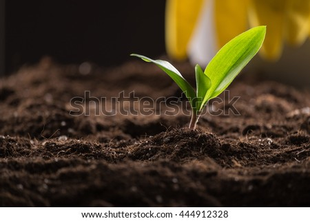 Green young sprout growing in fertile soil with watering can and rubber gloves on background