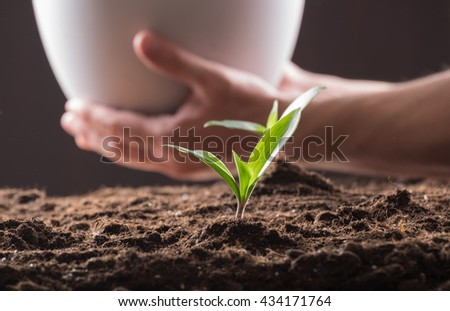 Green young sprouts growing in good brown soil and white flowerpot in man hand. New life concept