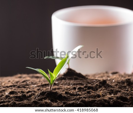 Green young sprouts growing in good brown soil and white flowerpot on background. New life concept - stock photo
