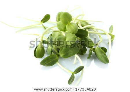 Green young sunflower sprouts isolated on white - stock photo