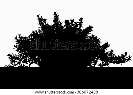 hebe plant stock photos images pictures shutterstock. Black Bedroom Furniture Sets. Home Design Ideas
