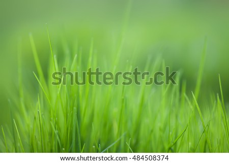Greenery plant pantone color. Grass field textured background, macro view. energy concept soft focus.