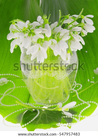 Greenery snowdrops spring, the first flowers, snowdrops in a vase on a background of a large green leaf, moisture, still-life, eco, environment and new technologies, the care of nature, natural beauty