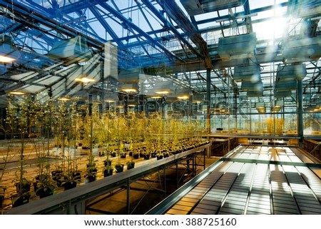 Greenhous with young plants - stock photo