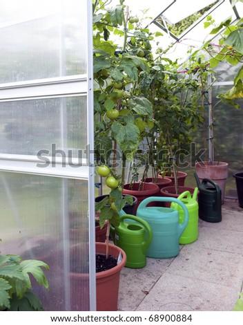 Greenhouse closeup - stock photo