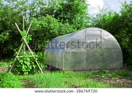 Greenhouse-cold frame and trellis with grapes in the garden - stock photo