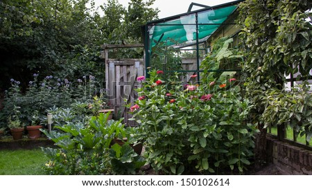 Greenhouse, flowers and vegetables in the vegetable garden at home