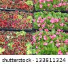 greenhouse for the intensive cultivation of flowering plants and flower pots - stock photo