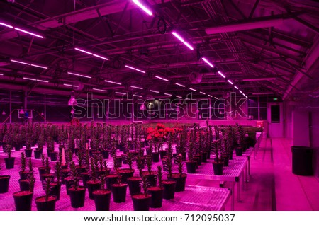 Ordinaire Greenhouse Interior With LED Light Fixtures