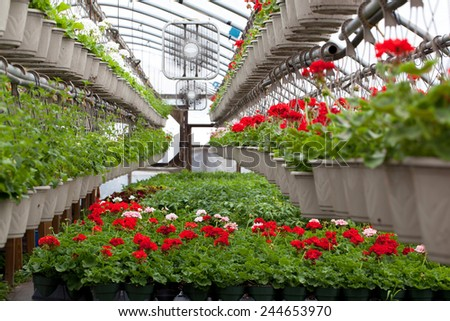Greenhouse nursery with a variety of colorful flowers plants and hanging baskets. - stock photo