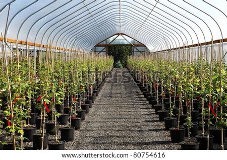 Greenhouse plant nursery, Oregon. - stock photo