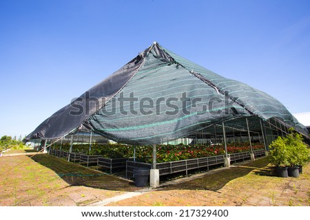 Greenhouse seedling - stock photo