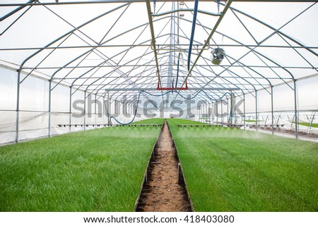 Greenhouse watering system in action Ecology World Environment Day CSR Seedling Go Green Eco Friendly Earth Health Care Food Garden New Life concept. - stock photo