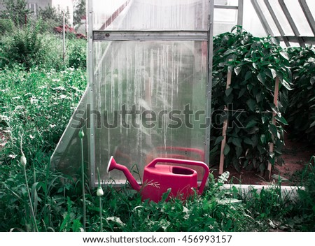 Greenhouse with crowing red pepper (cayenne)