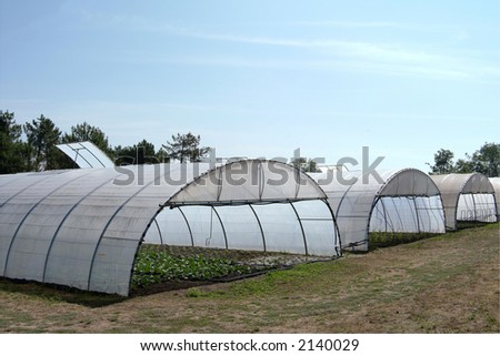 Greenhouse with cultivated fresh vegetables - stock photo