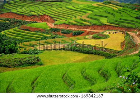 Greenish rice fields landscape in the mountain of Sapa, Vietnam
