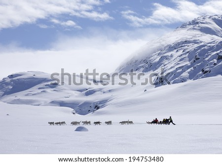 GREENLAND - APRIL 8,2014: Group of unidentified riders making a dog sled trip across of east part of Greenland - stock photo