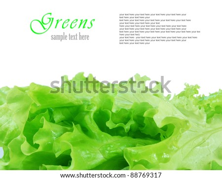 Greens. A place for your text. - stock photo