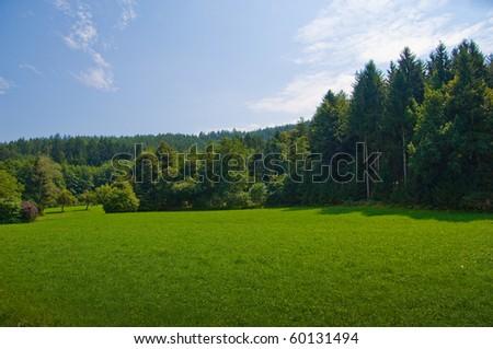 Greenwood landscape - stock photo