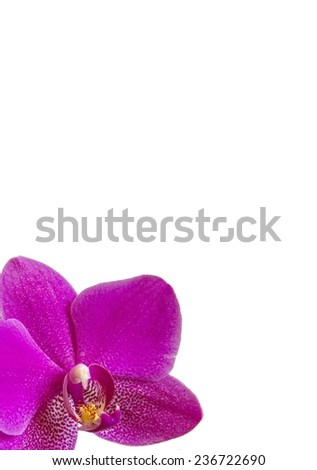 Greeting card with Violet Orchid Flower on white background - stock photo