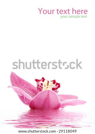 greetingcard with beautiful orchid against white background - stock photo
