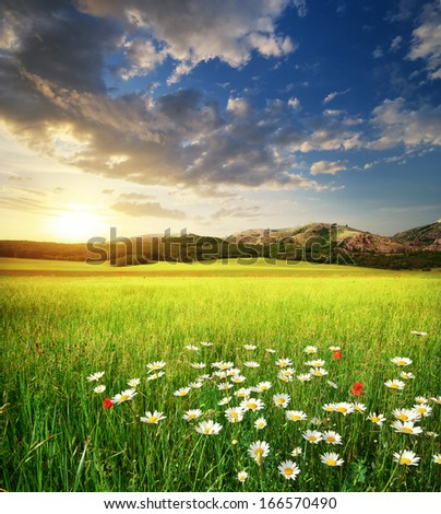 Gren meadow in mountain. Nature composition. - stock photo
