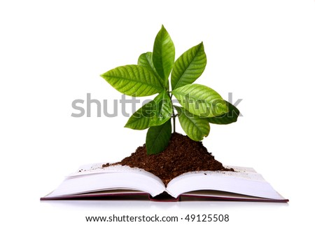 greng plant in the book - stock photo