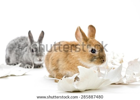 grey and brown bunnies with white leaves in a studio, white background