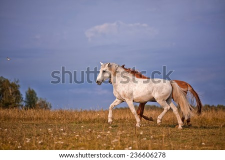 Grey and red stallions on blue sky background - stock photo