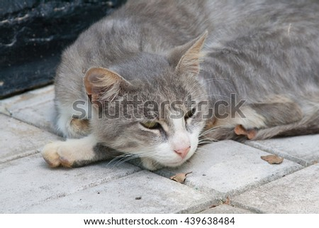 Grey and white domestic cat