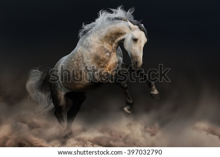 Grey andalusian horse run in desert storm - stock photo