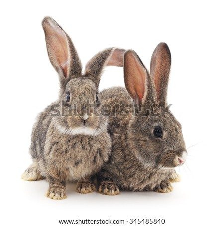 Grey baby rabbits on a white background.