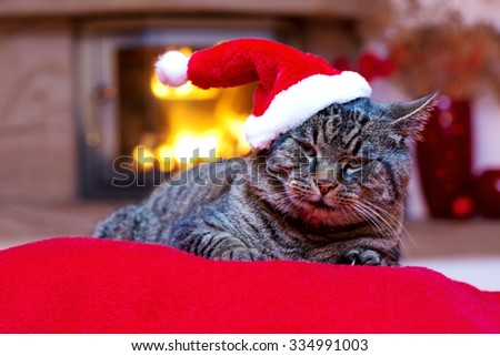 Grey cat by the fireplace.Seated Gray Cat with Santa hat and a fireplace.Christmas cat by the fireplace.